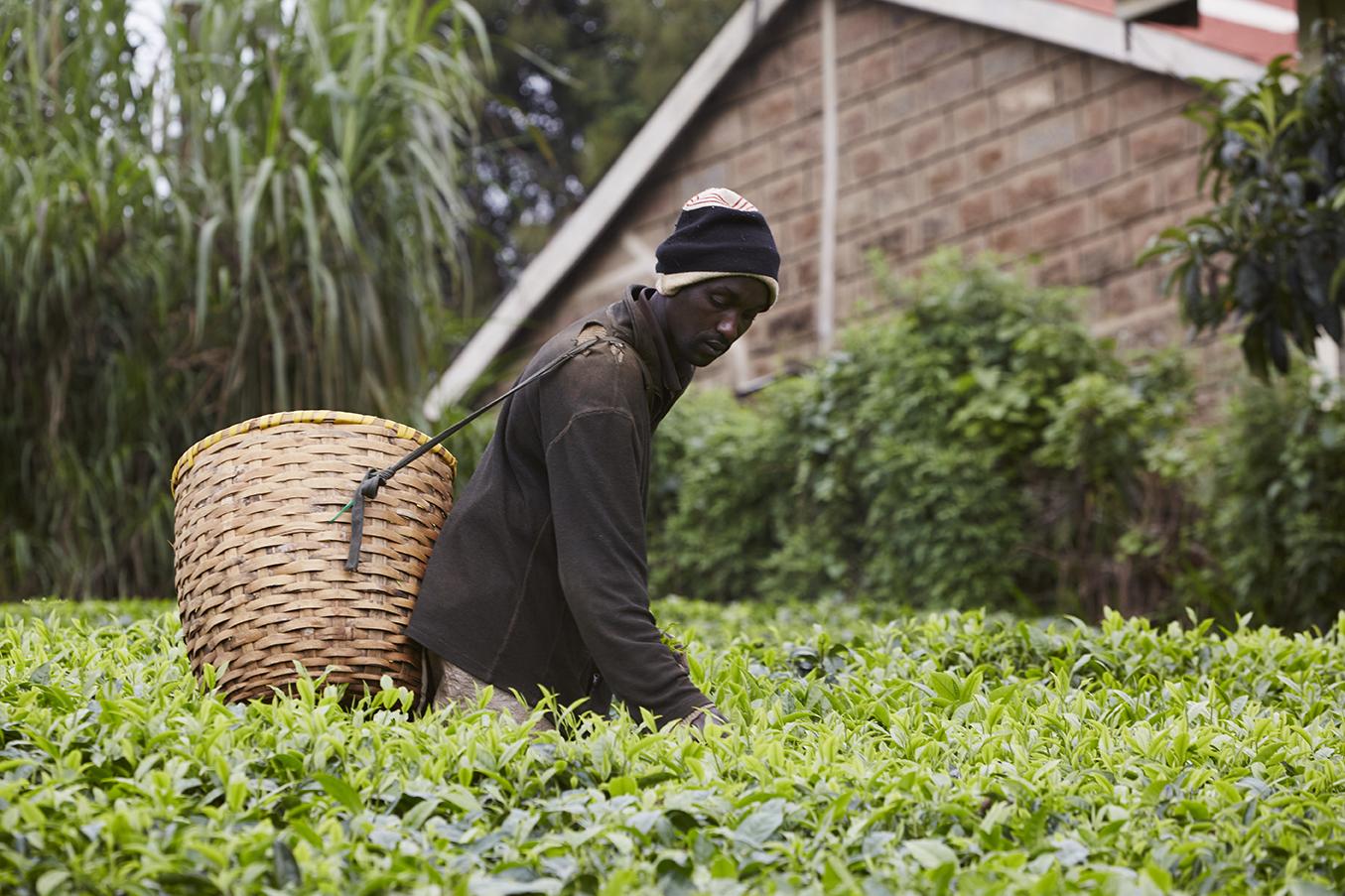 Mokomboki Tea Factory